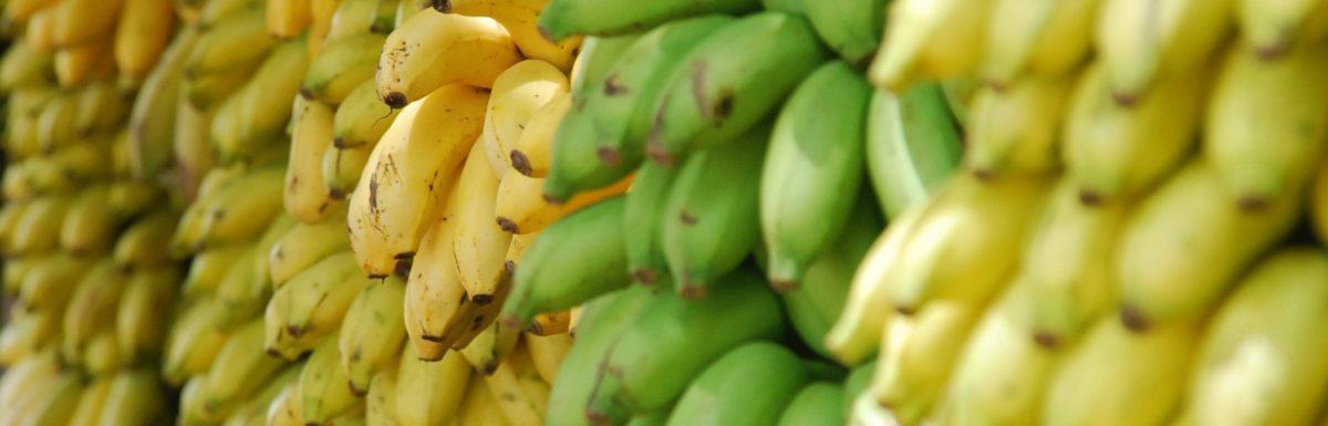Ecommerce faz roupas com biofibra de casca de banana