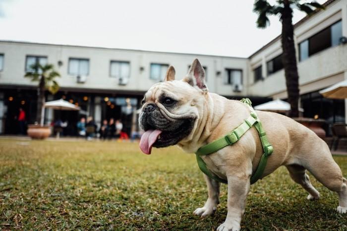 montar um pet shop online